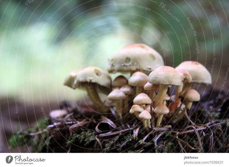 Zauberhaft Umwelt Natur Klima Pflanze Nutzpflanze Wildpflanze Pilz Pilzhut pilzgruppe Garten Park Wiese Wald Freude Glück Tapferkeit Außenaufnahme Nahaufnahme