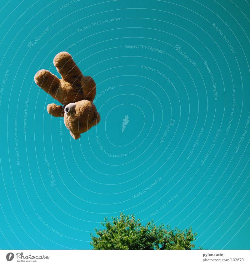 Flying Teddy zum Zweiten Teddybär Fell braun Stofftiere Quaste weich Baum grün Sommer Wolken Schwung Spielzeug Plüsch Knopfauge Spielen fliegen Himmel blau