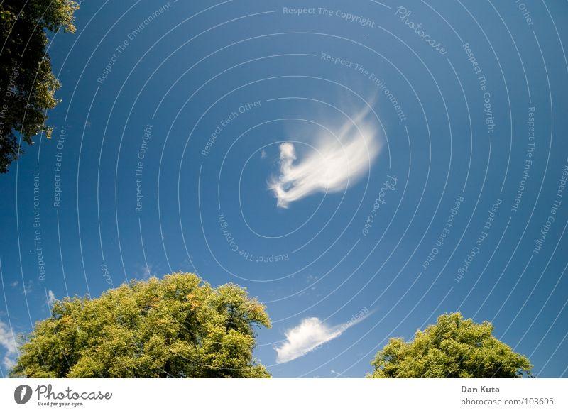 Angehimmelt Himmel Baum grün blau Sommer Freude Wolken Ferne Freiheit hoch Sträucher weich Freizeit & Hobby Ast zart leicht