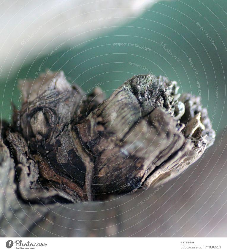 Geborsten Umwelt Natur Pflanze Baum Garten Park Holz alt ästhetisch authentisch außergewöhnlich eckig trocken braun grau grün türkis Senior Stress rein