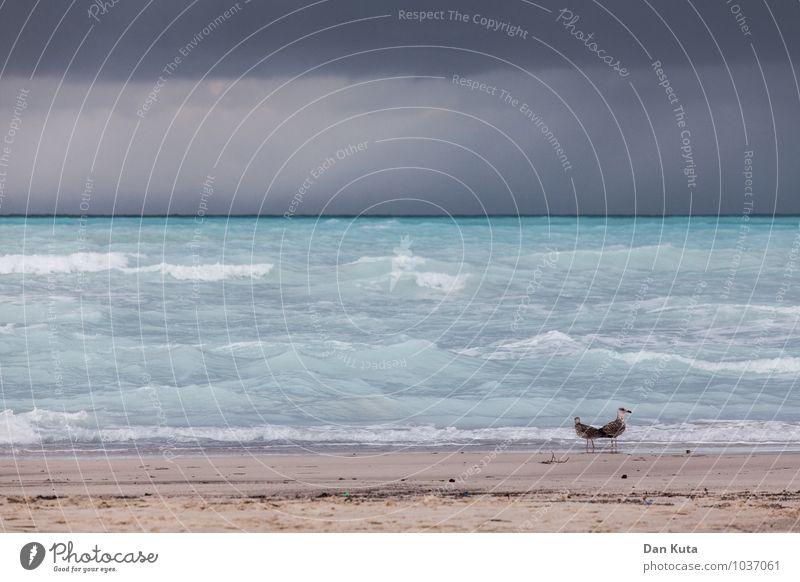 Wilde Möwen Himmel Sommer Wasser Meer Wolken Tier Strand dunkel kalt Herbst Traurigkeit Küste Vogel Regen Wellen Tierpaar