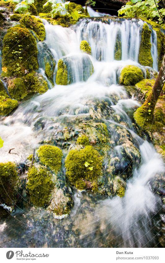Immer flüssig Natur Wasser Moos Wald Bach Wasserfall Plitvicer Seen Bekanntheit fließen Langzeitbelichtung grün sanft weich Ewigkeit einfrieren Wölbung Farbfoto