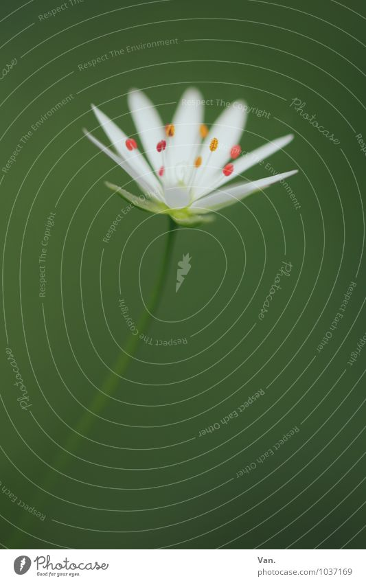 blumig Natur Pflanze Sommer Blume Blüte Stengel schön grün weiß Farbfoto mehrfarbig Außenaufnahme Nahaufnahme Makroaufnahme Menschenleer Textfreiraum oben