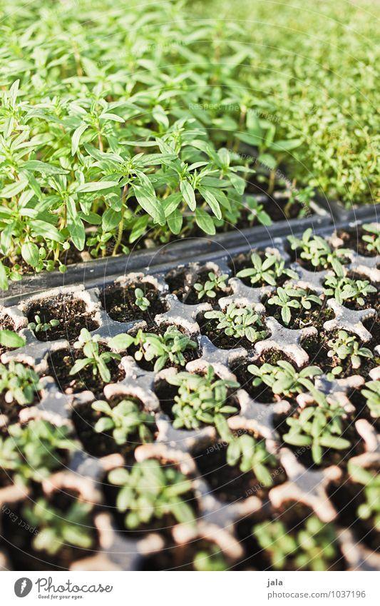 stecklinge Arbeit & Erwerbstätigkeit Gartenarbeit Landwirtschaft Forstwirtschaft Natur Pflanze Blatt Grünpflanze ästhetisch nachhaltig natürlich Beginn Farbfoto