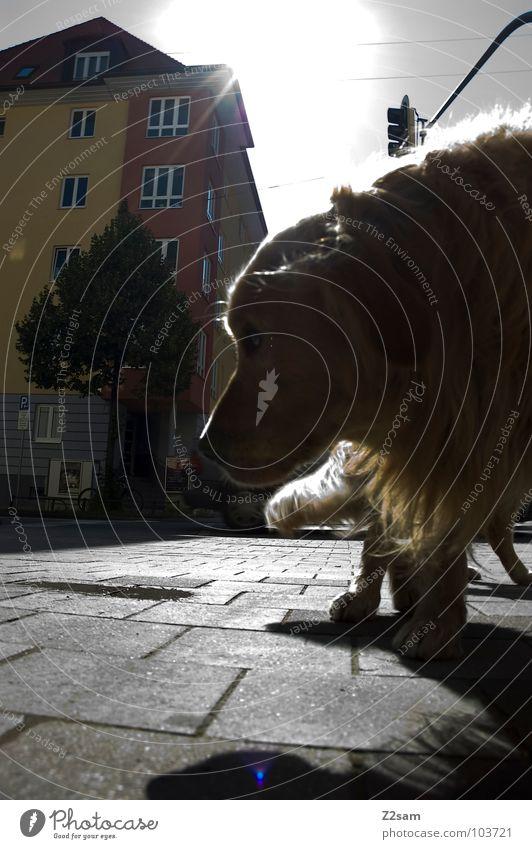 katerstimmung Himmel Baum Sonne Haus Tier Hund gehen Fell Müdigkeit drehen Säugetier Pfote Haustier Pflastersteine Schnauze Hauskatze