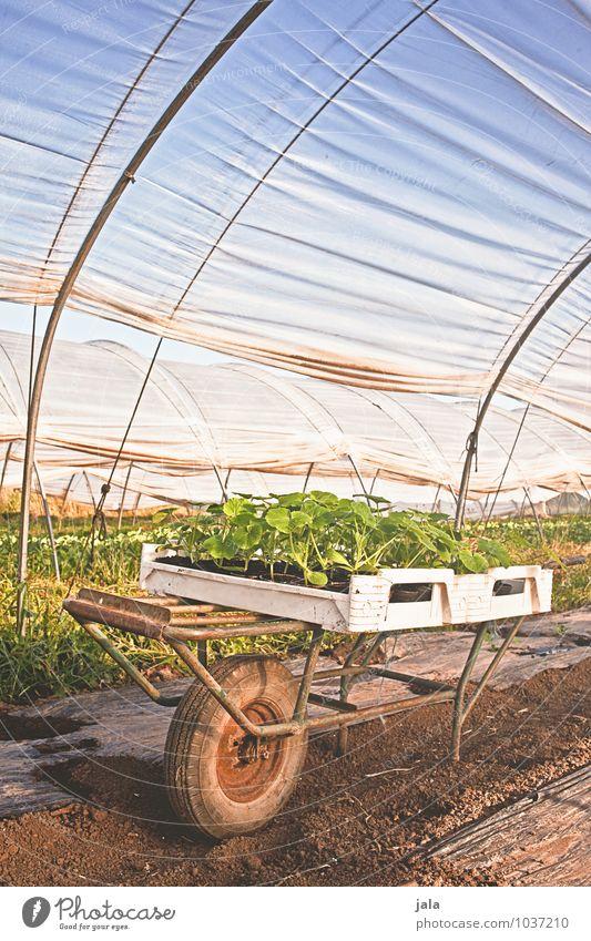 stecklinge Arbeit & Erwerbstätigkeit Gartenarbeit Arbeitsplatz Landwirtschaft Forstwirtschaft Natur Pflanze Frühling Blatt Nutzpflanze Bauwerk Gewächshaus gut