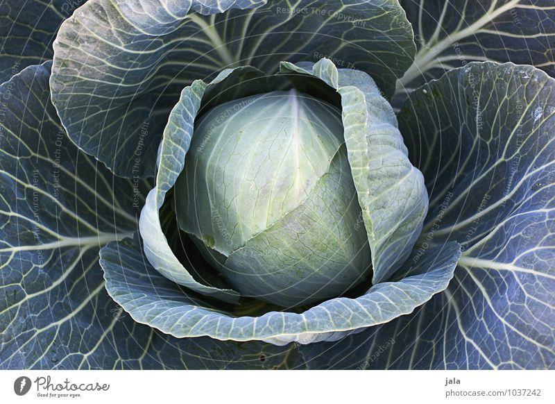 kohl Lebensmittel Gemüse Bioprodukte Vegetarische Ernährung Landwirtschaft Forstwirtschaft Natur Pflanze Nutzpflanze Kohl Kohlgewächse Feld frisch Gesundheit