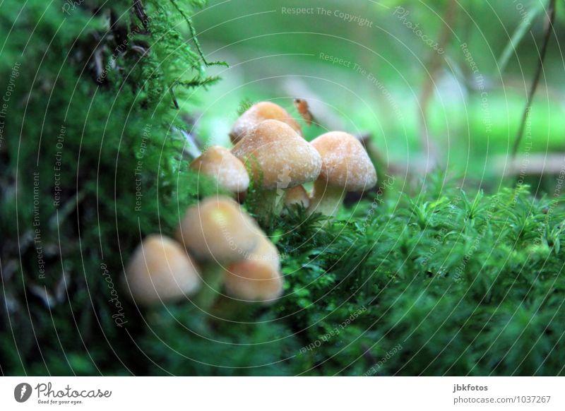 Waldentdeckungen Natur Pflanze schön Umwelt Wiese Gesundheit außergewöhnlich Garten Park elegant authentisch Erfolg ästhetisch niedlich Unendlichkeit