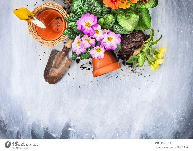 Blumentöpfe, Erde, Schaufel und Primeln Blumen Natur Pflanze grün Sommer Blume gelb Frühling Stil grau Hintergrundbild Garten Freizeit & Hobby Erde Design Gerät Gartenarbeit