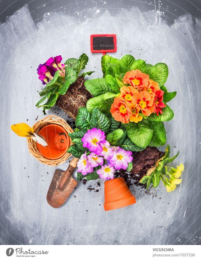 Primeln Blumenerde, Töpfe , Schaufel und rotes Gartenschild Natur Pflanze Sommer Blatt Blüte Frühling Stil Freizeit & Hobby Design Dekoration & Verzierung