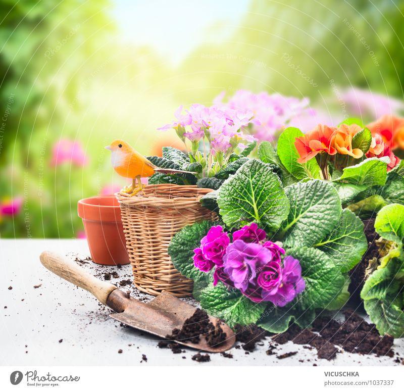 Blumen im Garten pflanzen Stil Design Dekoration & Verzierung Natur Pflanze Frühling Sommer Park Zeichen Gartenarbeit Primelgewächse Kissen-Primel Schaufel