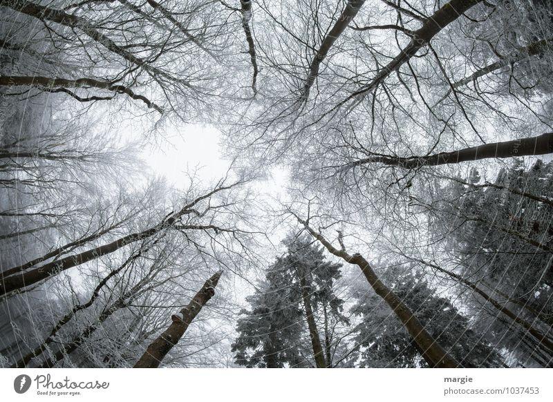 Himmelwärts Natur Pflanze Baum Blatt Tier Winter Wald kalt Umwelt Schnee Wetter Eis Wachstum Kraft trist
