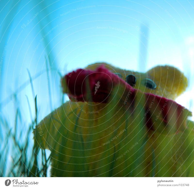 Knællo Teddybär gelb Plüsch Bär Himmel blau Rasen Katzengras D 80 rote Schleife