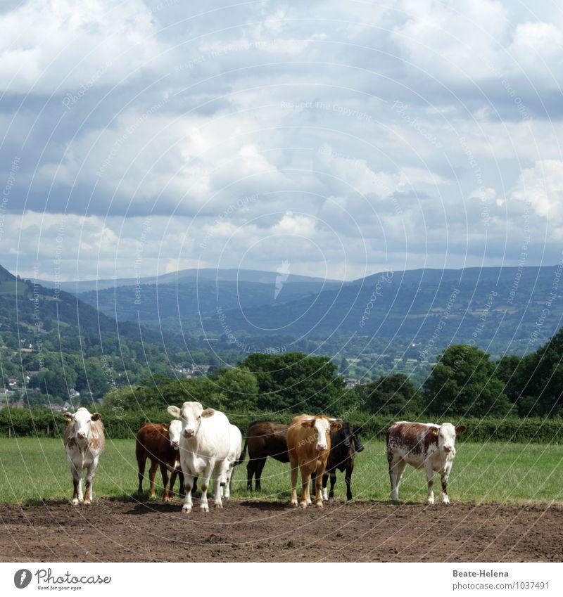 Missverständnis   ihr werdet schon noch sehen Ferien & Urlaub & Reisen Landwirtschaft Forstwirtschaft Natur Landschaft Tier Himmel Wolken Sommer Schönes Wetter