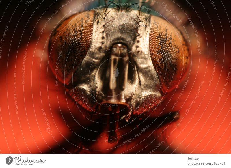 Ich sehe was,... Tier Auge Fliege Insekt nah Wachsamkeit Intuition Facettenauge Mandibel