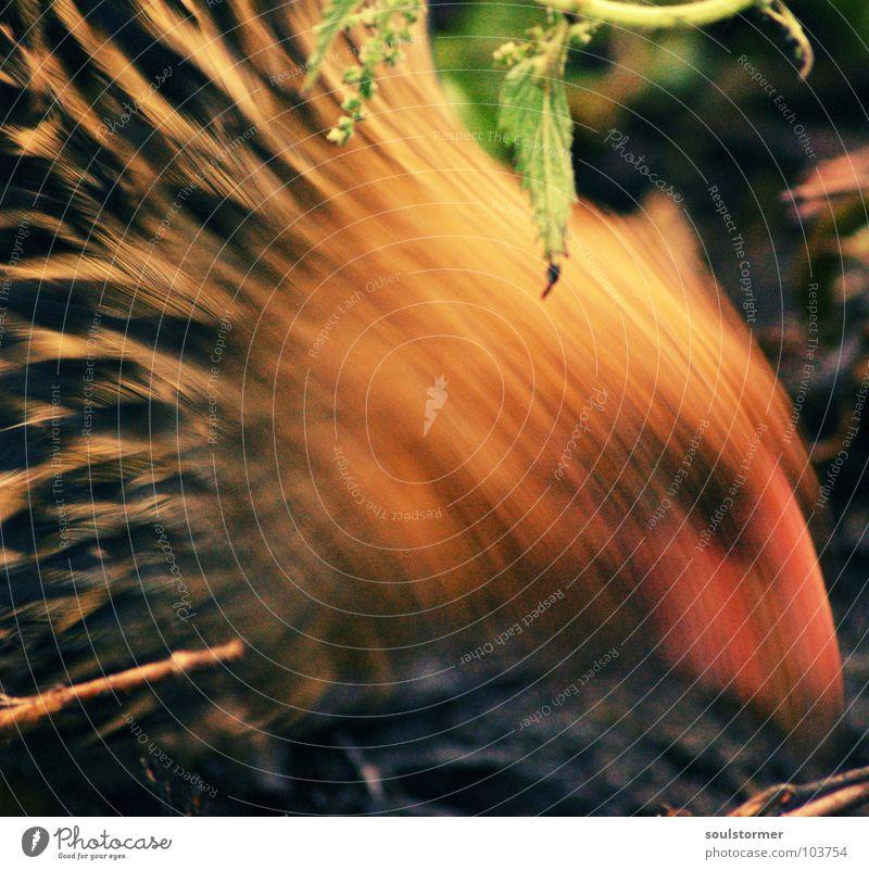 essen fassen Tier Ernährung Lebensmittel Bewegung Vogel Erde Feder Korn Ei Haushuhn Hahn Bewegungsunschärfe
