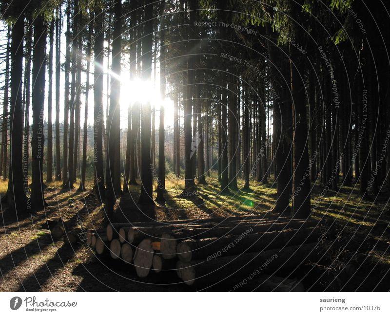 Licht im Wald Baum Sonne Leben Holz Landschaft hell frei hoch Hoffnung Lust parallel