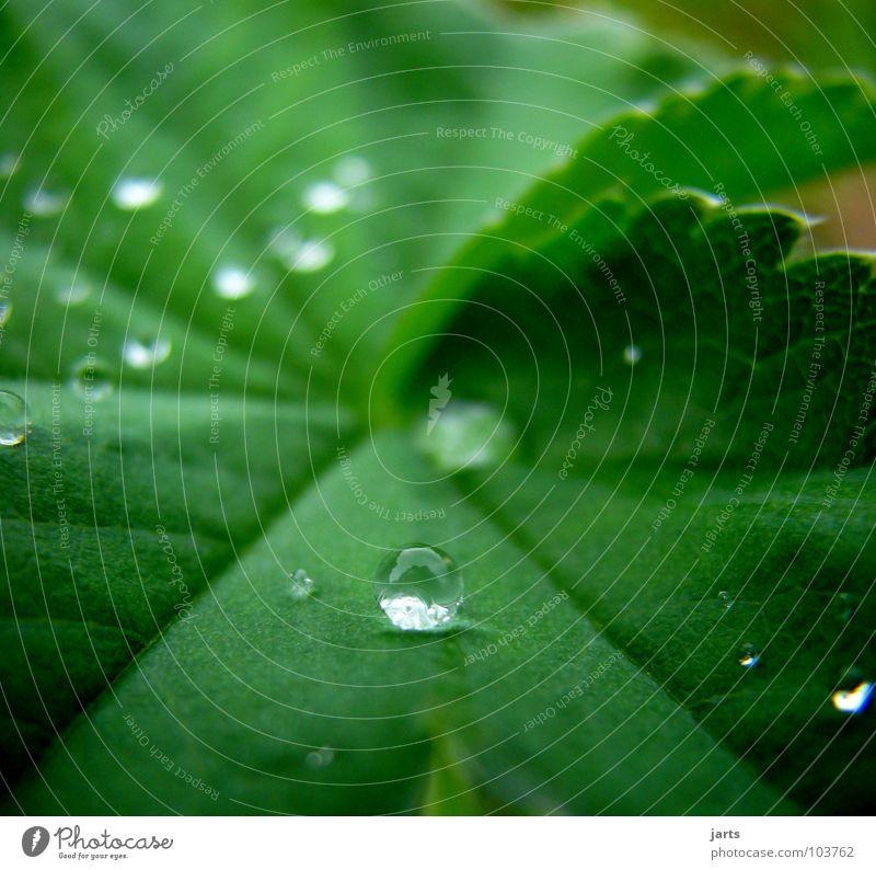 Tropfen Wasser grün Blatt Regen nass Wassertropfen Seil Kugel