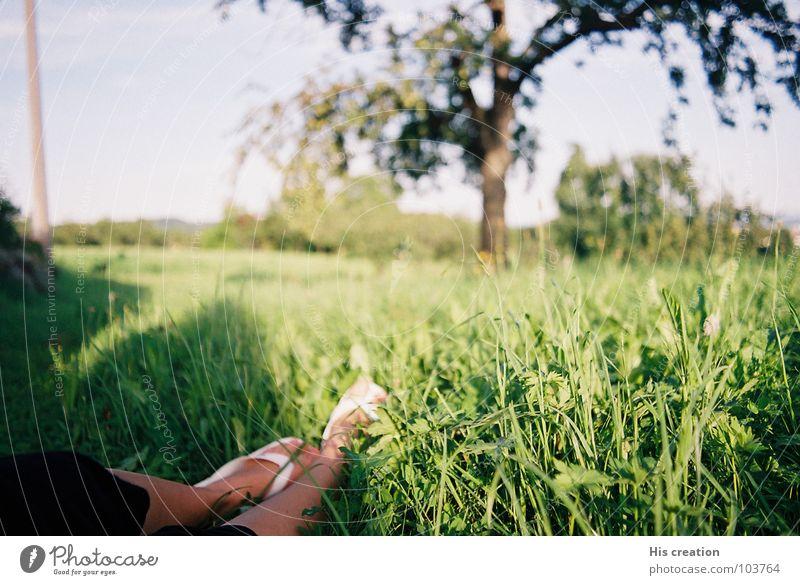 Ein schöner Sommertag Frau Natur weiß Baum grün Sommer Freude ruhig Erholung Wiese Freiheit Fuß Wärme Physik Flipflops Apfelbaum