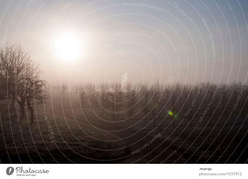 Guten Morgen Ausflug Umwelt Natur Landschaft Wolkenloser Himmel Sonne Frühling Herbst Klima Schönes Wetter Nebel Baum Wein Wege & Pfade frisch kalt Stimmung