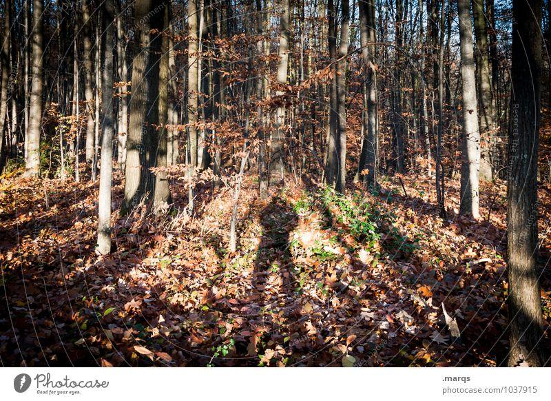 Ich glaub ich steh im Wald Mensch Natur Baum Landschaft Umwelt Herbst natürlich Stimmung Erde stehen wandern Ausflug Baumstamm skurril