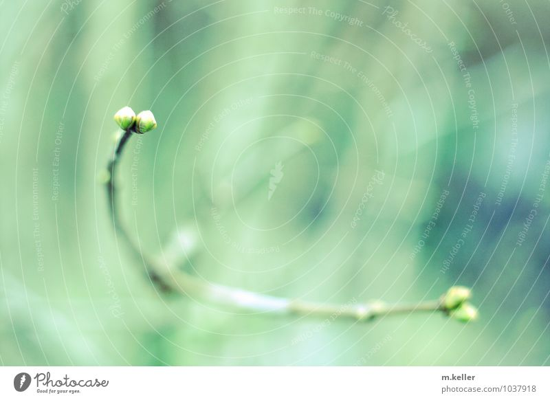 new life Natur Pflanze Frühling Wachstum Lebensfreude Zukunft Hoffnung Vorfreude Blattknospe Frühlingsgefühle