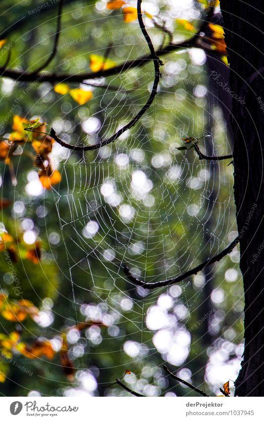 Thekla wartet schon Natur Ferien & Urlaub & Reisen Pflanze Baum Landschaft Tier Wald Umwelt Herbst Gefühle Angst Wildtier Tourismus Ausflug Schönes Wetter Abenteuer