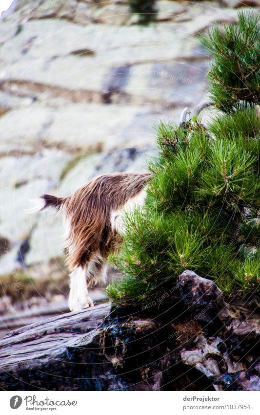 Ganz schlecht versteckt Natur Ferien & Urlaub & Reisen Pflanze Sommer Landschaft Tier Ferne Umwelt Berge u. Gebirge Gefühle Freiheit Felsen Wildtier Tourismus