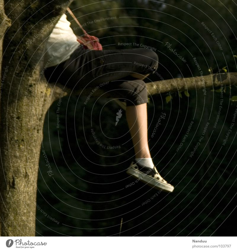 baumeln Wohlgefühl Zufriedenheit Erholung Sommer Mensch Frau Erwachsene Beine Fuß Herbst Wärme Baum sitzen Pause Physik Ast gemütlich behagen rumsitzen Farbfoto