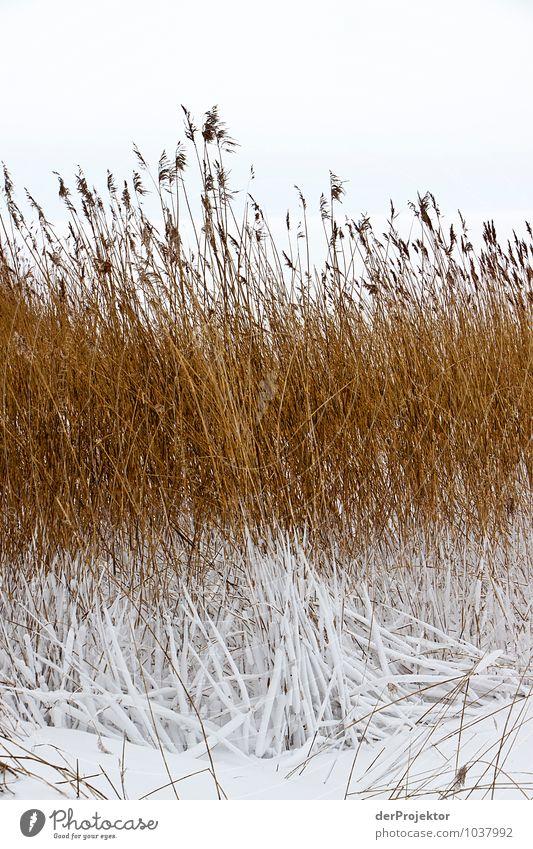 Die Farben des Winters Ferien & Urlaub & Reisen Tourismus Ausflug Abenteuer Winterurlaub Umwelt Natur Landschaft Pflanze Tier Urelemente schlechtes Wetter Eis