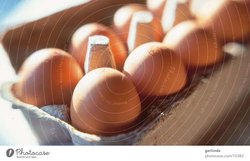 Eier Lebensmittel Ernährung