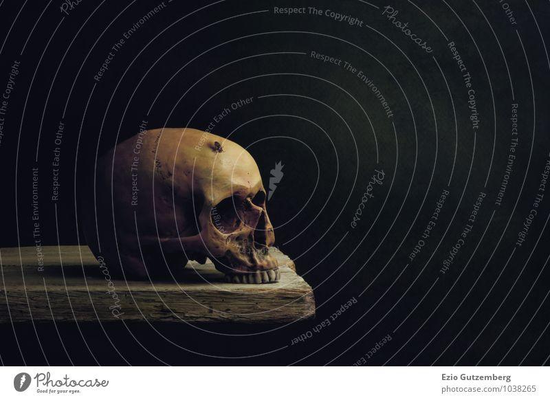 Vanitas Stillleben; Leben, Tod und Auferstehung Tier Kopf Fliege Vergänglichkeit Symbole & Metaphern gruselig Paddel