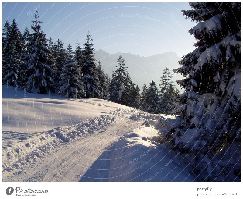 Winterspaziergang Garmischer Alpen Tanne schön Winterstimmung Hintergrundbild Bayern Garmisch-Partenkirchen traumhaft Berge u. Gebirge Schnee Landschaft Natur
