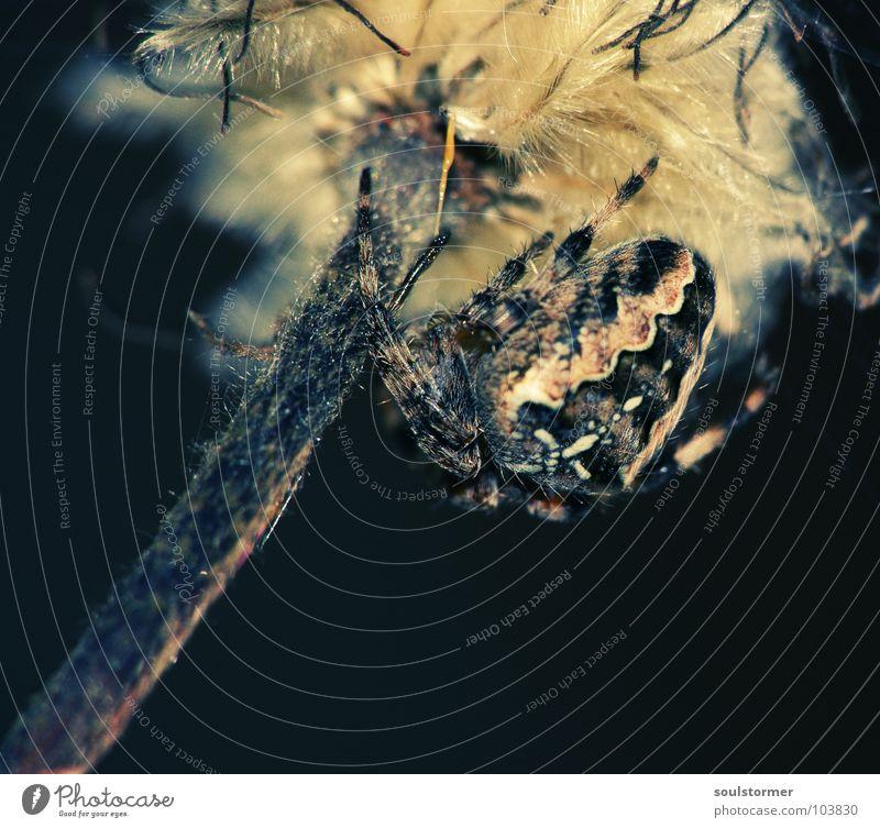 Spiderpower Cross Processing Grünstich Gelbstich Spinne Kreuzspinne 8 schwarz dunkel Blume Spinnennetz Insekt Ernährung fangen Ekel schreien dick Bäh