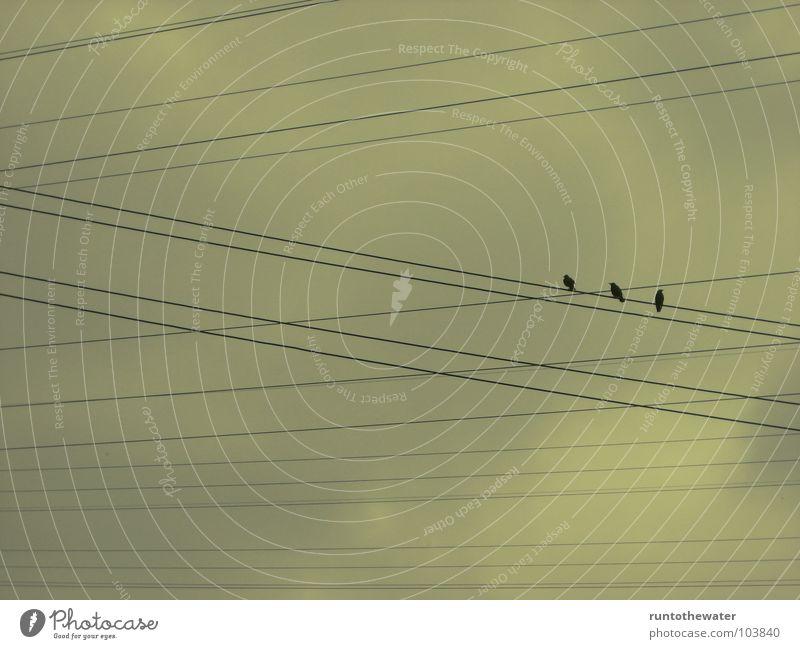 Alle für einen Himmel Erholung Wolken Garten Vogel Aussicht Elektrizität Pause Kabel Momentaufnahme atmen Gebet Leitung schlechtes Wetter Aufenthalt Situation