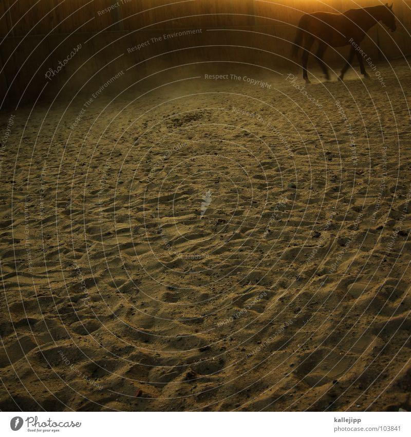 1 ps Pferd Tier Nutztier Reithalle voltigieren laufen Pferdegangart auslaufen Zigarettenmarke Cowboy Huf stark Sonnenuntergang Staub animal lieblingstier