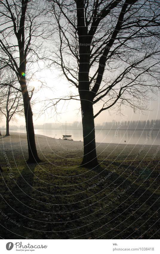 Gegenlichtbäume. Natur Wasser Sonne Sonnenlicht Winter Nebel Baum Flussufer Bucht Ferien & Urlaub & Reisen Segelboot Segeln Atmosphäre Morgendämmerung