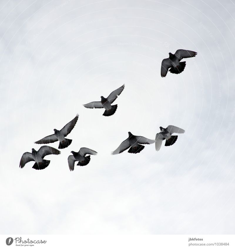 Flugshow Tier Gefühle Glück Freiheit fliegen Vogel Zusammensein träumen wild Luft frei Luftverkehr Wildtier ästhetisch Flügel Tiergruppe