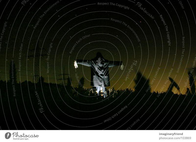scary scarecrow Wiese Feld gruselig Korn Kornfeld Halloween Nachtaufnahme Vogelscheuche
