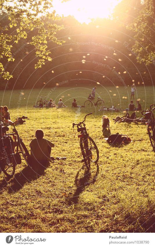 Funkenstille Mensch Natur Jugendliche Sommer Sonne Erholung ruhig Erwachsene Leben Wiese Glück Freiheit Zeit Freundschaft Zusammensein Park
