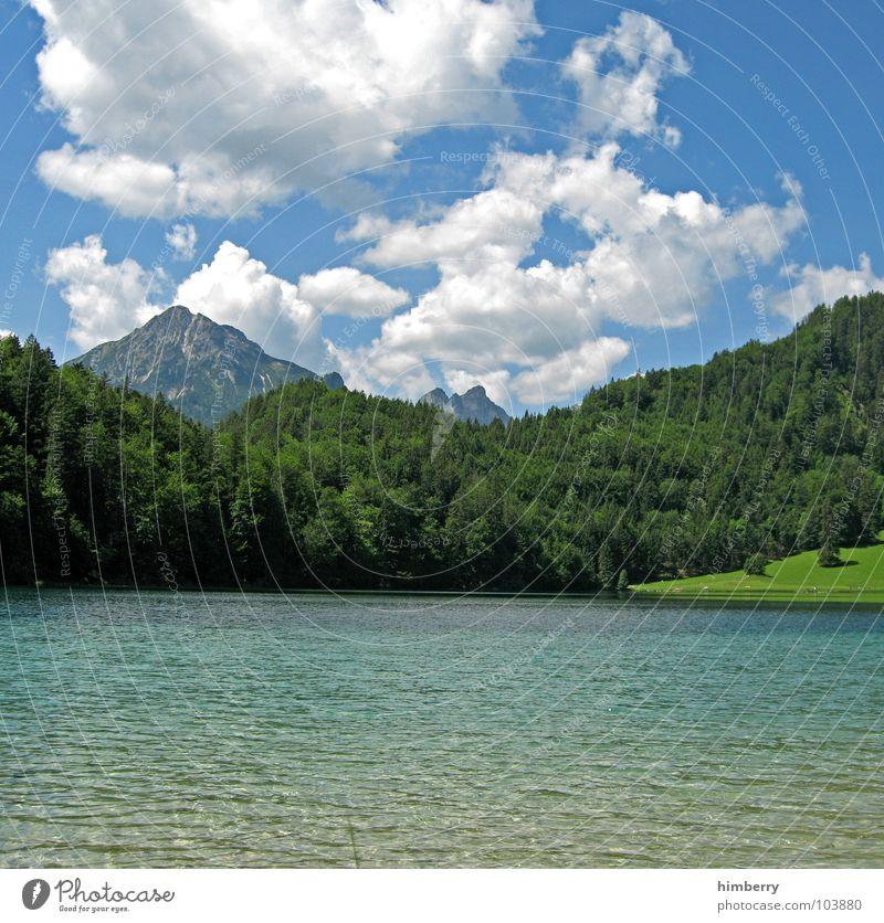 riviera royal XV Natur Himmel grün Pflanze Sommer Wolken Wald Wiese Gras Berge u. Gebirge Landschaft Umwelt Alpen Hügel Österreich Wildnis