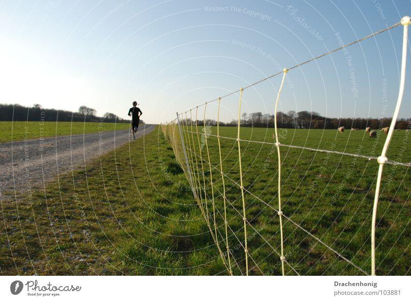 Zielstrebig Sicherheit Joggen Jogger Wiese Zaun Schaf Wege & Pfade zielstrebig Ausdauer Wohlgefühl Zufriedenheit Sportveranstaltung Vergänglichkeit