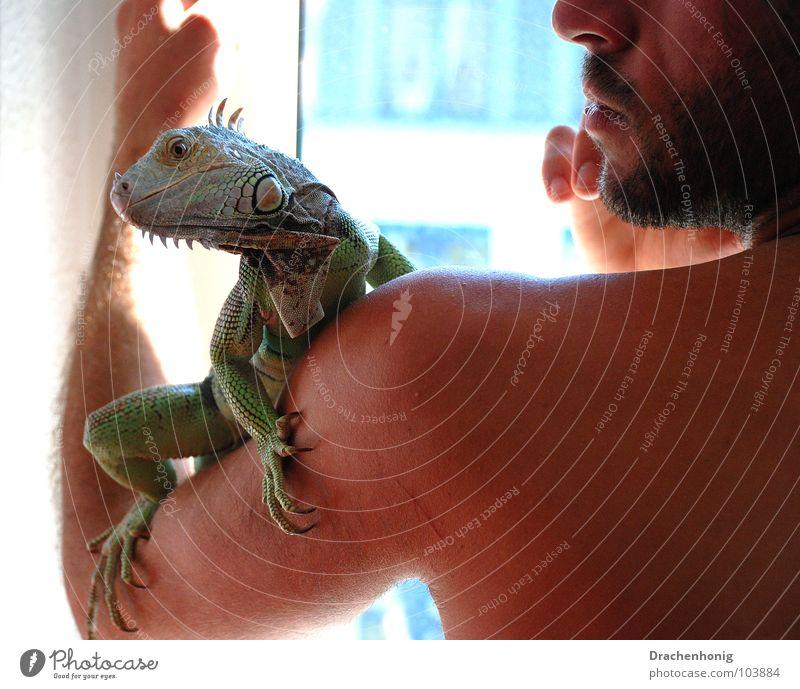 Der Leguanmann Leguane Mann Fenster nackt Oberkörper extravagant Haustier Drache Echsen Zoo Tier Reptil Terrarium Freundschaft vertauen Trauer Sicherheit