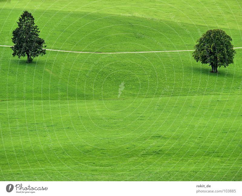 Dick und Doof Baum grün Sommer ruhig Blatt Einsamkeit Wiese Gras Wege & Pfade Landschaft Linie Zusammensein einfach Ast Hügel dick