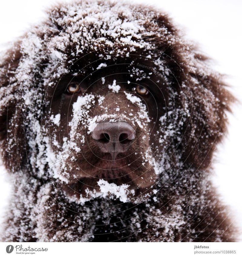 Der will nur spielen... Hund schön ruhig Tier Tierjunges Liebe Spielen braun Spaziergang sportlich Fell Wachsamkeit Haustier Langeweile kuschlig Treue