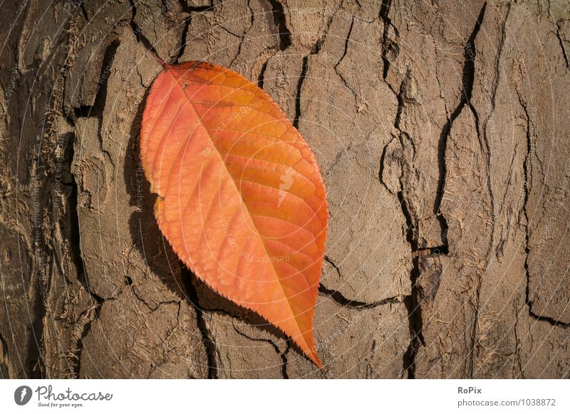 Herbstfarben Natur Ferien & Urlaub & Reisen alt Pflanze Baum Blatt Wald Umwelt Liebe Gefühle Holz Garten Kunst gehen Park