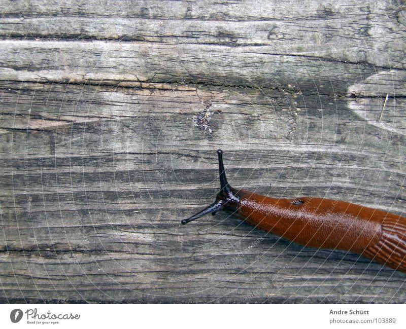 Homeless Tier Holz Schnecke schleimig Schleim Nacktschnecken Ragout