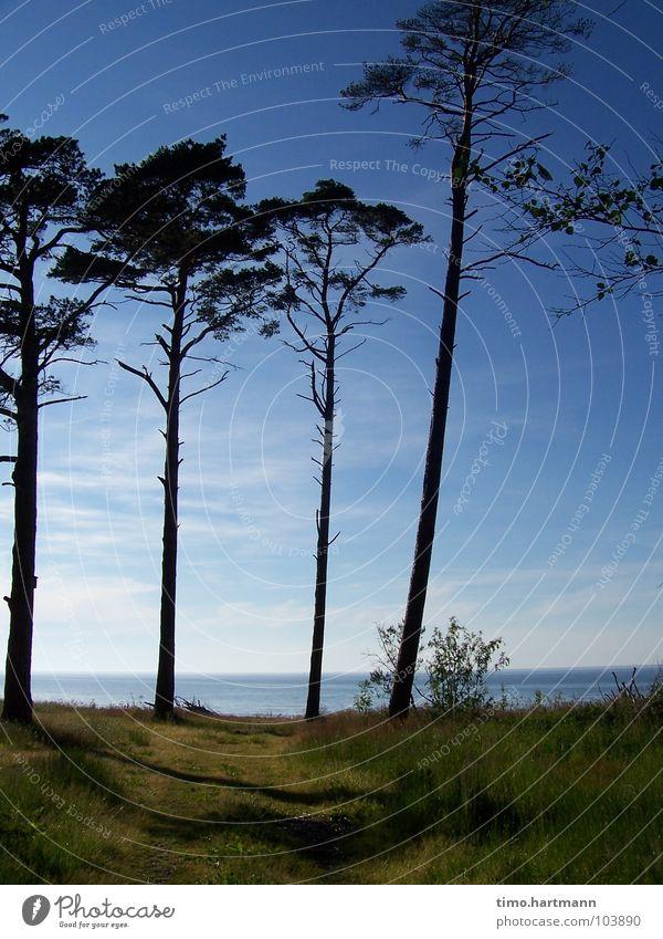 Weg zum Meer Himmel Baum Strand Ferien & Urlaub & Reisen Erholung Küste Stranddüne