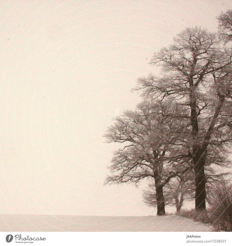 Wintereichen Pflanze Baum Wald Umwelt Schnee Garten Park Eis Feld Nebel hoch Frost Unwetter dick Eiche Eichenwald