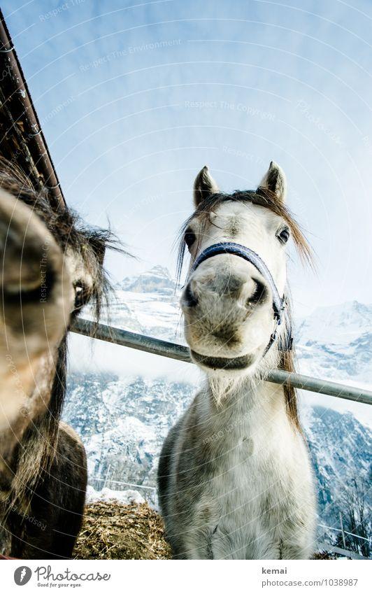 Oldies Tier Winter Berge u. Gebirge natürlich Schnee Zusammensein Freundschaft Zufriedenheit Eis authentisch stehen Schönes Wetter niedlich Freundlichkeit